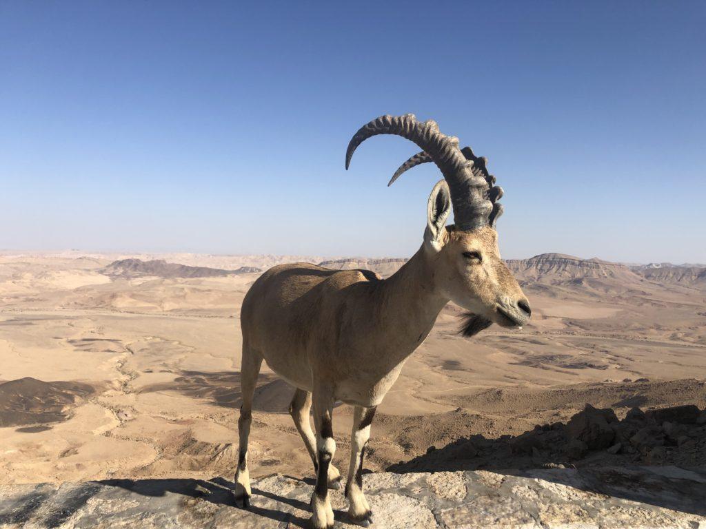 israel desert