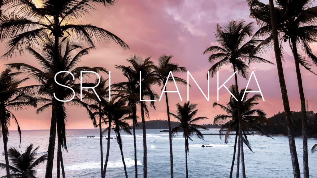 sri lanka palm trees